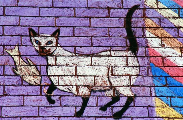 Cat - Graffitti Art