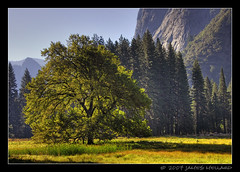 Morning in Yosemite Valley (Mellard) Tags: summer valley yosemite yosemitenationalpark hdr 5xp mellard