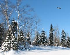 1er Dcembre 2007 (-VRo-) Tags: snow nature landscape neige paysage laurentides photoqubec lysdor landscapedream top25blue