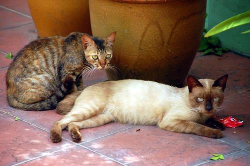 Telok Blangah Cats