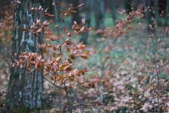 ryoku_de_5413 (ashesmonroe) Tags: wood trees winter wild sky detail nature leaves forest germany deutschland herbst badenwürttemberg hohenlohe badenwrttemberg eckartshausen ilshofen landkreisschwäbischhall landkreisschw¦bischhall