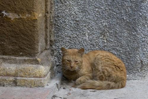 Moroccan Cat 1