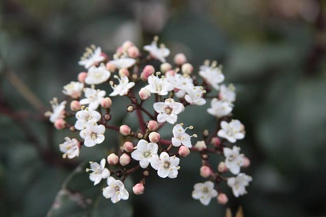 flowers 2/25/08