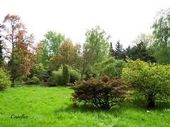 Arboretum Doorn (Cajaflez) Tags: trees green netherlands grass spring bomen groen doorn nederland arboretum arbres gras azalea printemps the voorjaar herbes baumen bloeien