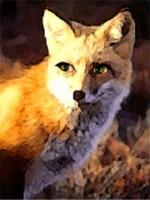 Foxwoman illustration