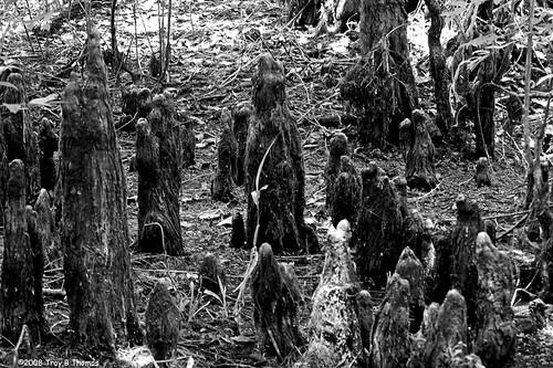 DriedOutSwampFloor