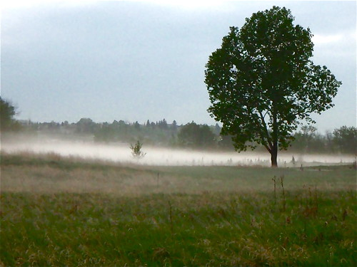 The Mist of Fish Creek