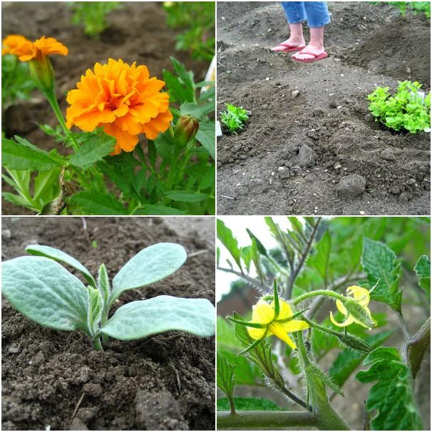 Garden: June 1st