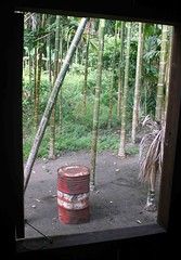 Window view (Mangiwau) Tags: new house west tree window indonesia guinea view shot drum cluster palm nut papua jaya betel barat pinang irja kaikai pohon pertamina sarmi irian buai papuan papouasie beneraf