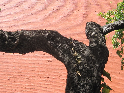 Old Tree Against a Brick Wall