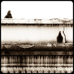 pigeons ledge (Steven Schnoor) Tags: roof bw art birds animals washington downtown pigeons border decoration aberdeen toned tinted oldbuilding schnoor decorativemoulding simplelogic