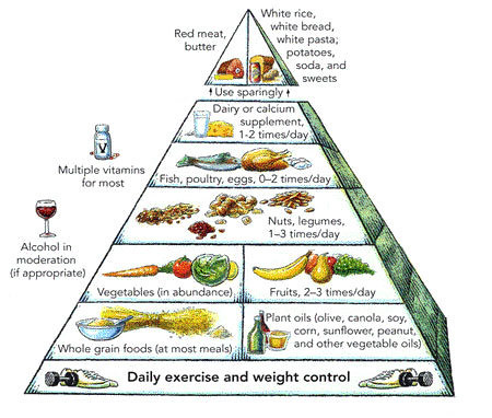 harvard-food-pyramid