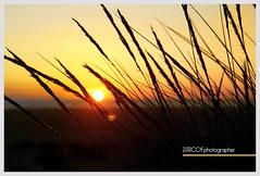 puesta (zarcof) Tags: sol de puesta
