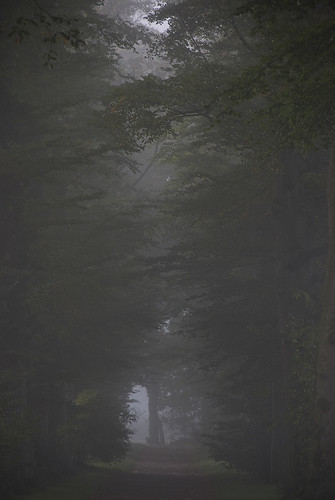 Misty_woodland_path_01