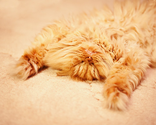 Garfi-Sleeping