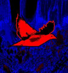 Bird on the Way (Rusty Russ) Tags: ocean camera flowers trees winter party summer arizona sky usa detail bird art cars love beach nature water graveyard rose night contrast america photoshop manipulated john fun fire fly photo yahoo google interesting twilight colorful flickr day image president great picture picasa super myspace niagara falls best psycho hillary fav olympic newsroom republican universe democrat j1 northernlights 08 saturate c1 barack stumbleupon daum flyingcars roseflower freeimage psdtuts