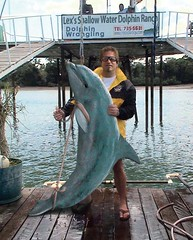 Dolphin Hog Tie (Flapjack Weasonsmith) Tags: ranch vacation fish water fishing dolphin rope trophy hogtie deepsea