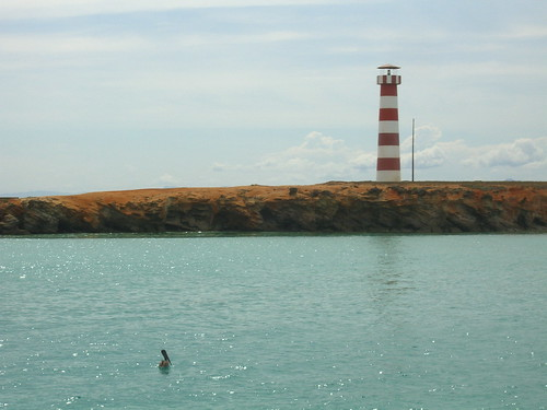 Pelican and Lighthouse