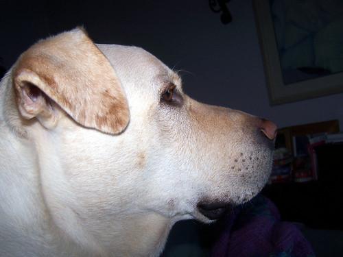 Zeus_profile_1107