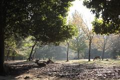 Nara Koen -moening#3