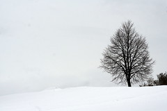 Il a neig (Quentin46) Tags: winter snow tree silhouette hiver neige arbre