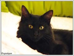 119119119 (gyakusan_reido) Tags: cats cat neko nya