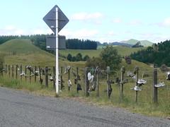 P1090410 (philrickerby) Tags: newzealand hawkesbay tutira shoefence