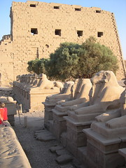 Avenue of Ram-Headed Sphynxes (upyernoz) Tags: temple ruins egypt sphynx karnak luxor مصر الكرنك الأقص أبوالهول معبدالكرنك