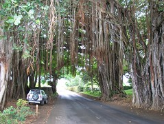 100_2616.JPG (Drevellatiosi) Tags: mauritius floraandfauna