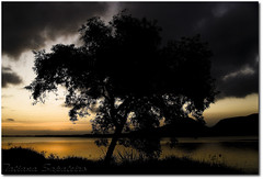 Thank you... (.Tatiana.) Tags: hello friends light sunset pordosol tree luz contraluz landscape lol paisagem reflexions árvore guarujá johanes fotoclube 10faves perequê johanesduarte betterthangood abeautifulandlovelysundaynearsampa trilhasonorabyjohanes siteparavendadefotos httpwwwplanobfotodesigncom japanoway necessitovergenteelugaranimadocomcaradebrasil tipopicanhasabe canseidejapatailandêsemexicano tipojacarégrill fototatianasapateiro