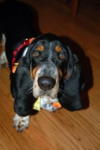 Ernest at 23 months