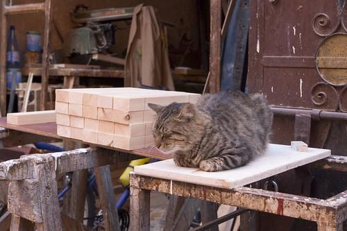 Moroccan Cat 4