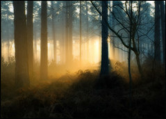 waking the forest (mikE~510) Tags: morning trees light shadow mist cold silhouette fog forest sunrise frost olympus bosque wald foret forests bracknell e510 platinumphoto foret topofthefog theperfectphotographer alemdagqualityonlyclub