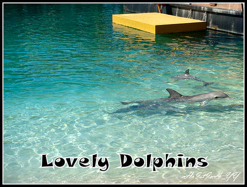 Sea World : Lovely Dolphins