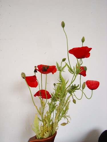 poppies opens before my eyes (7)