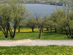 Printemps (asimon.photo) Tags: spring lover mont parc amoureux morency