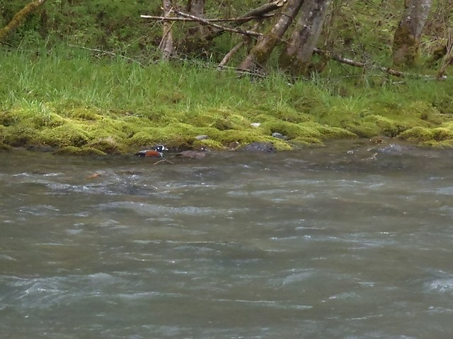 middle fork of the willamette bird life