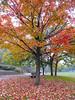 Autumn Scene... (Diego3336) Tags: park autumn red urban toronto ontario canada tree fall nature leaves leaf maple oak riverside humber lionspark