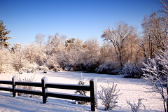 Snowy field (Clint Voris, Alliance Images) Tags: winter snow fall fence landscape snowy  scenic frosty clint scenics winterwonderland snowytrees copyright frostyleaves snowyfence clintvoris allianceimages snowyleaveswinter