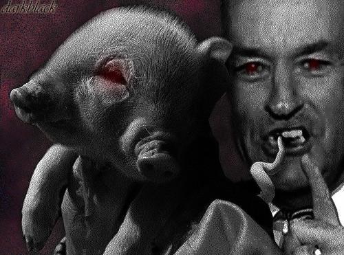 Pig Biting Mad