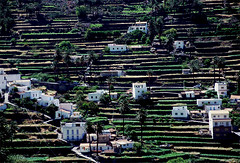 Valle Gran Rey, La Gomera, Canary Islands (curreyuk) Tags: landscape spain village searchthebest steps terraces scenic canaries canaryislands lagomera vallegranrey currey linescurves passionphotography spspain aplusphoto flickraward grahamcurrey curreyuk peachofashot