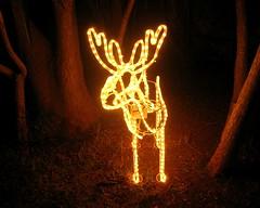 Rudolph... (poly_mnia) Tags: christmas winter decorations friends night lights navidad holidays friendship noel athens greece christmasdecorations voula earthnight abigfave dearflickrfriend merhaba merhb geniiloci bungoballa juniorwomble