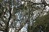 Old tree (Swami Stream) Tags: india gardens canon landscape botanical rebel bangalore images karnataka swami lalbagh brances swaminathan karntaka banaglore bengaluru xti 400d swamistream swamistreamcom