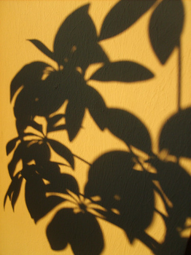Shadow of my lovely green plant