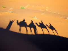 Caravan (Marco Di Fabio) Tags: sahara shadows desert ombre camel morocco marocco caravan fabulous sombras smörgåsbord blueribbonwinner mywinners platinumphoto anawesomeshot impressedbeauty superaplus aplusphoto diamondclassphotographer flickrdiamond excellentphotographerawards theunforgettablepictures sfidephotoamatori platinumheartaward nginationalgeographicbyitalianpeople tup2 phvalue mygearandme mygearandmepremium mygearandmebronze mygearandmesilver mygearandmegold lpshadows3 lpriding