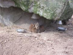 IMG_1960 [1024x768].JPG (yerseypijpelink) Tags: rhenen ouwehands dierentuin yersey