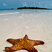 starfish image, photo or clip art
