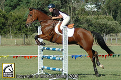 30th-March-284 (michael_marsh_photos) Tags: horse equine showjumping showjump jumpclub berryridingclub michaelmarsh michaelmarshphotos