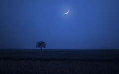 The Sound of Silence (Su Inc) Tags: travel blue moon tree field silhouette night landscape photography countryside asia solitude rice paddy space vietnam negative southeast minimalism emptiness sonya100 photofaceoffwinner photofaceoffplatinum photofaceoffchampion pfogold caygao fotocompetition aptanlap fotocompetitionbronze fotocompetitionsilver fotocompetitiongold jan09pfobrackets