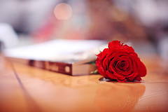 ,, (A.A.A) Tags: red blur love rose photography book bokeh redrose khalifa aaa amna missu irresistible brida abdulaziz althani paulocohelo amnaaalthani